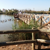 L' Estany de Nules (Castellón)