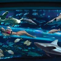 ¿Tobogán entre tiburones?... sí en ¡Las Vegas!