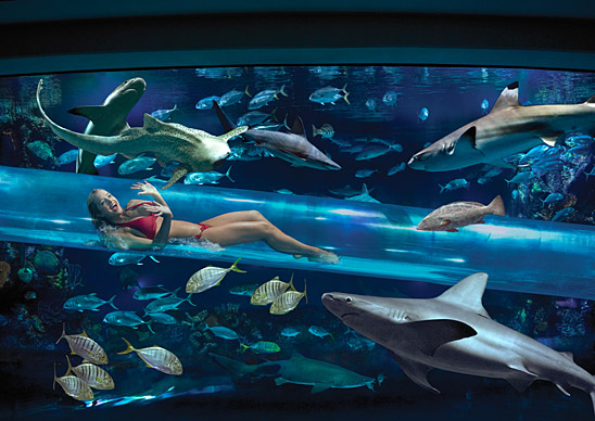 golden-nugget-slide-through-shark-tank.jpeg